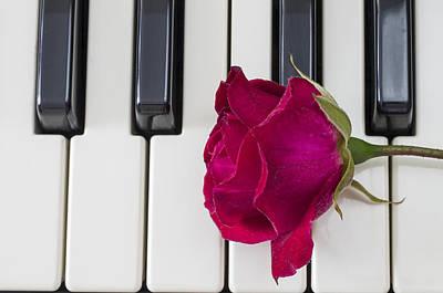 Rose Over Piano Keys Art Print