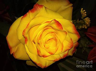 Photograph - Rose Passion Yellow Impression by Saundra Myles