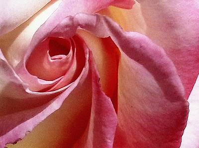 Photograph - Rose by Patrick Morgan