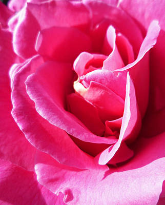 Roses Royalty-Free and Rights-Managed Images - Rose Perfect Imperfection by Irina Sztukowski