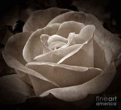 Photograph - Rose Perfection Sepia by Chalet Roome-Rigdon