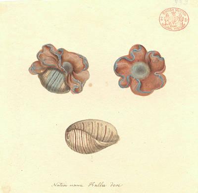 Rose-petal Bubble Shell Art Print