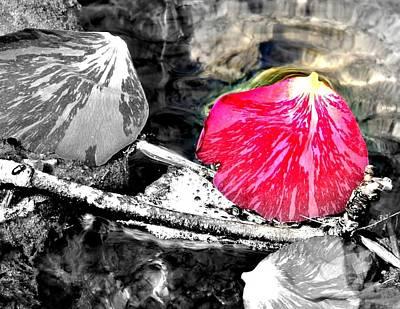 Rose Petal Creek Art Print