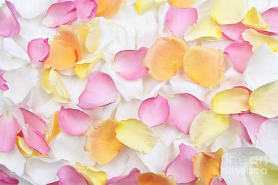 Petal Photograph - Rose Petals Background by Elena Elisseeva