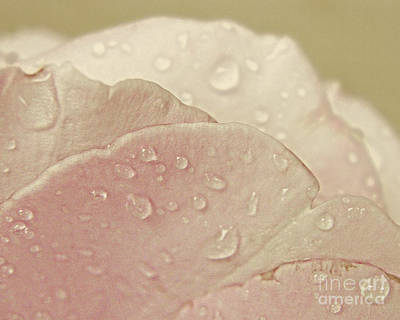 Photograph - Rose Petals by Emily Kelley