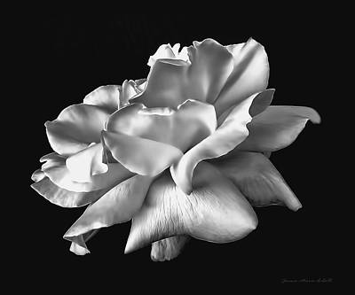 Photograph - Rose Petals In Black And White by Jennie Marie Schell