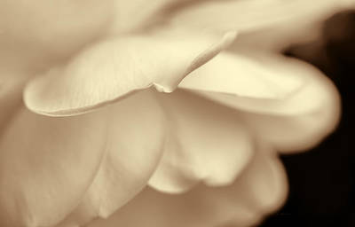 Photograph - Rose Petals Soft Brown by Jennie Marie Schell