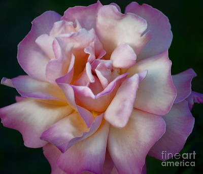 Rose Petals Straight From My Heart Art Print by Gwyn Newcombe