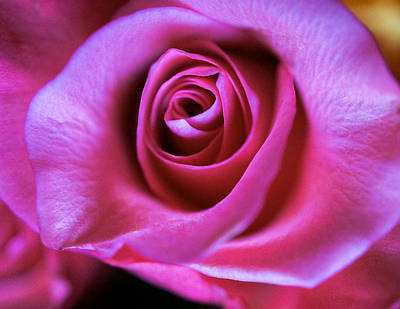 Photograph - Rose Pink by Ronda Broatch