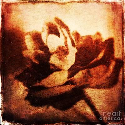 Rose Red Vintage Art Print by Beth Williams