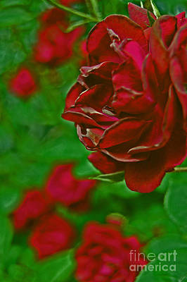 Photograph - Rose Red By Jrr by First Star Art