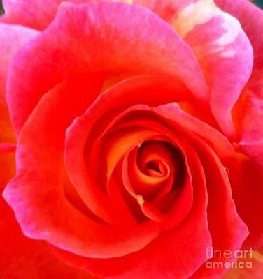 Pop Art - Rose Red by Susan Garren