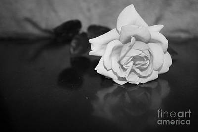 Photograph - Rose Reflection by M Valeriano