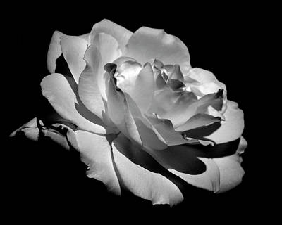 Graceful Photograph - Rose by Rona Black