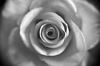 Rose Spiral 4 Art Print by Kim Lagerhem