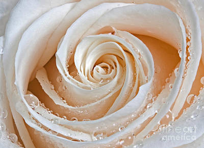 Rose Swirls And Dew Art Print by Susan Candelario