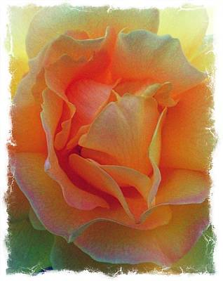 Photograph - Rose Taken At Sunset  by Daniele Smith