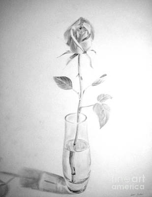 Drawing - Rose by Tamir Barkan