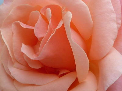 Photograph - Rose Tell Me Your Secret 3 by Debra Collins