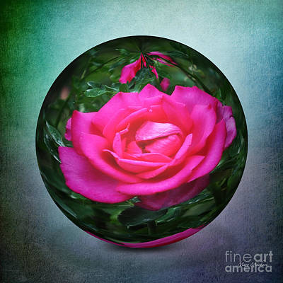 Paper Weight Photograph - Rose Through The Glass by Mary Machare