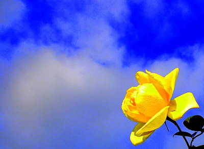 Photograph - Rose To The Sky by Guy Pettingell