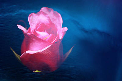 Rose Water Dreams Print by Toni Hopper