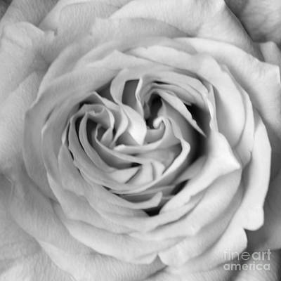 Photograph - Rose With Heart B W by Connie Fox