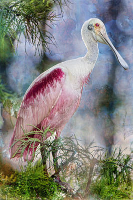 Spoonbill Wall Art - Photograph - Roseate Spoonbill In Evangeline Parish by Bonnie Barry