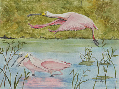 Spoonbill Drawing - Roseate Spoonbill In Flight by John Edebohls