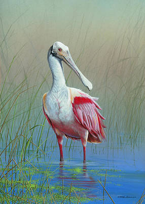 Roseate Spoonbill Art Print by Mike Brown