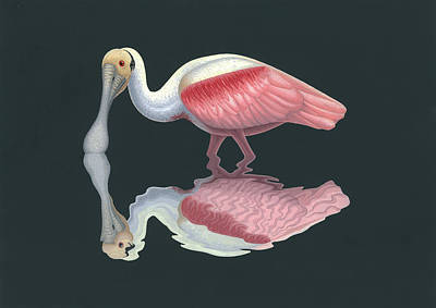 Spoonbill Painting - Roseate Spoonbill by Nathan Marcy