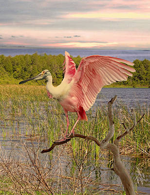 Spoonbill Digital Art - Roseate Spoonbill At Lake St. George by Schwartz