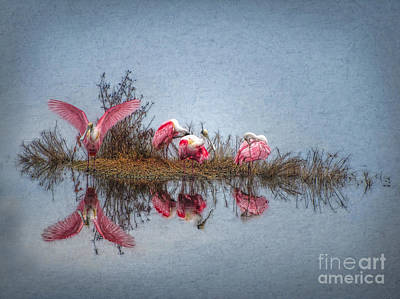 Spoonbill Wall Art - Digital Art - Roseate Spoonbills At Rest by Lianne Schneider