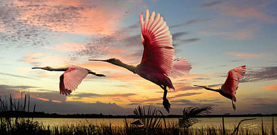 Spoonbill Digital Art - Roseate Spoonbills Of Lake Tarpon by IM Spadecaller