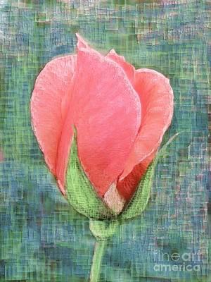 Digital Art - Rosebud by Barbara Moignard