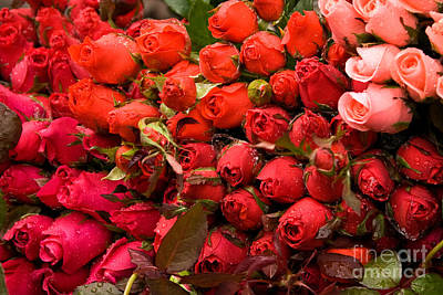 Photograph - Roses 03 by Rick Piper Photography