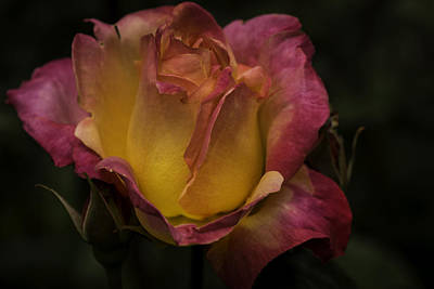Photograph - Roses 6 by Jean-Jacques Thebault