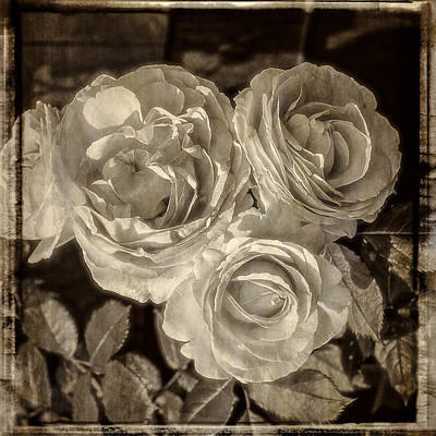 Photograph - Roses A La Baril by Frank Winters