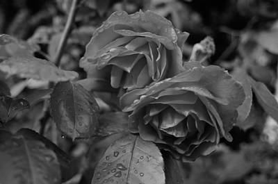 Photograph - Roses And Rain by Miguel Winterpacht