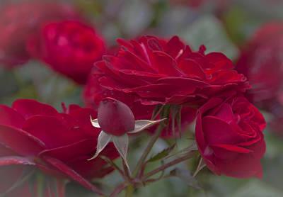 Roses And Roses Art Print