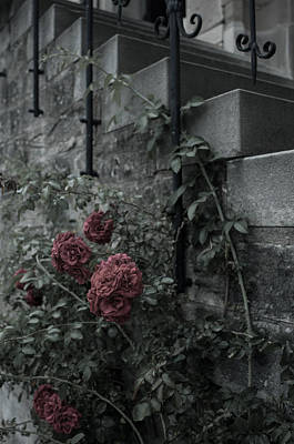 Photograph - Roses And Stone by Miguel Winterpacht