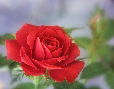 Photograph - Roses Are Red by David and Carol Kelly