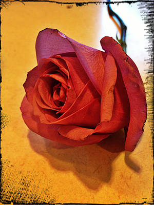 Photograph - Roses Are Red by Linda Sannuti
