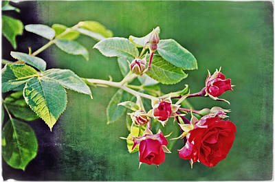 Photograph - Roses Are Red My Love by Mike Martin