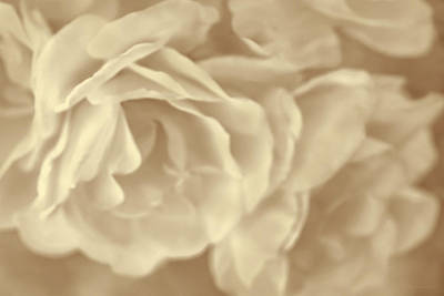 Photograph - Roses Bouquet Soft Beige by Jennie Marie Schell
