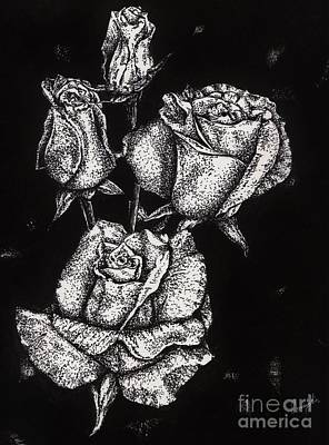 Ink Drawing Drawing - Roses by Celia Fedak
