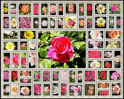Of Roses And Love Wall Art - Painting - Roses Collage 2 - Painted by Stefano Senise