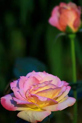 Roses Art Print by Deborah  Crew-Johnson