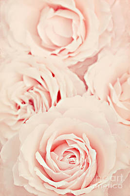 Pink Flower Photograph - Roses by Diana Kraleva