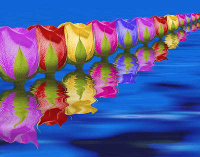 Rainbow Rose Photograph - Roses Floating by Tom Mc Nemar